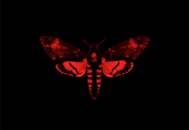 lil-wayne-i-am-not-a-human-being-2-album-cover